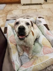 Em was in bad shape when she recently arrived at the SPCA via a kill shelter in Miami. Had the SPCA not saved her, she would have been euthanized. Now she's been nursed back to health and is looking for a forever home.