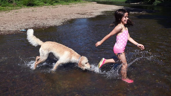 A dog named Journey follows Robin Nelson as she splashes