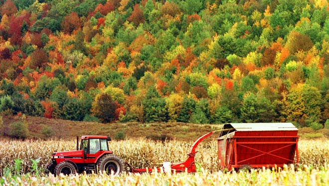 In this October 1998 file photo, a farmer chops corn in front of a hillside of color in Richmond, Vt. About 3.5 million visitors visit the state each year to check out the foliage.