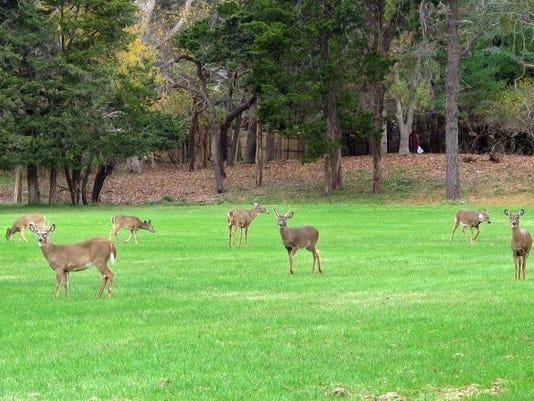 Deer (2)