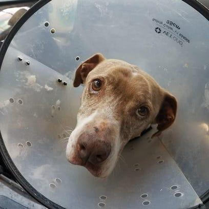Lost Dog Hazel home
