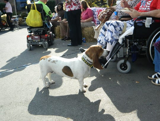 Daisy, the Bassett hound, probably doesn't realize