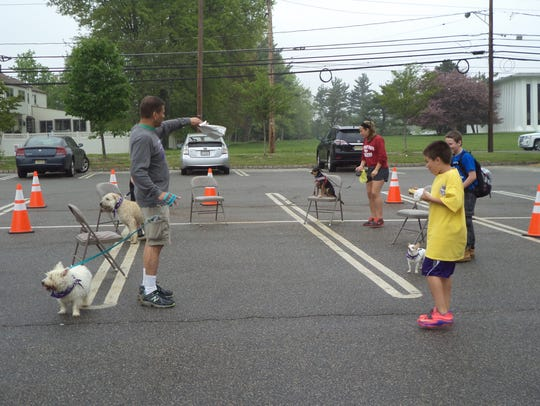 At the Bark For Life at Malapardis Park, dogs had a