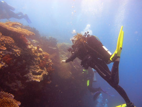 Danielle Dixson, diving on a reef in the Indo-Pacific. She is part of a team that will now be looking at a coral reef in Belize.
