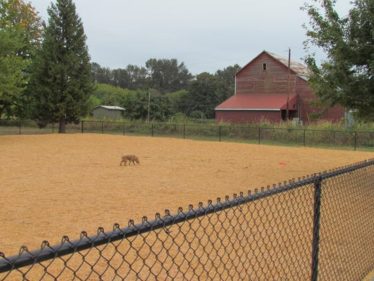 Stayton Community Dog Park has a number of features,