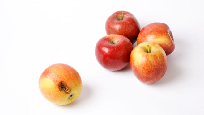 Can one bad apple really spoil the whole bunch? In the case of a bad employee, absolutely!