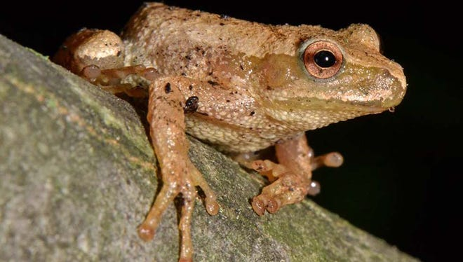 Be ready to help these amphibians come out of hibernation, starting this Sunday night, and anytime there's warm and rainy weather.