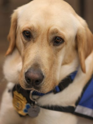 New Castle County police announce the addition of Nikko, a facility assistance dog from Canine Companions for Independence during a press conference at the Paul J. Sweeney Public Safety Building Monday.