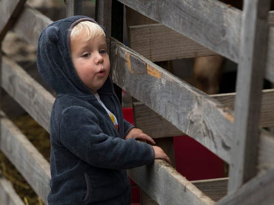 Nolan Potts, 2, of Evansville spots Amelia, a goat, at the petting zoo during his trip to Goebel Farms Wednesday morning.