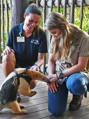 Kelsey Eiswerth, an animal keeper, and Bindi Irwin, conservationist and daughter of the late Steve Irwin, at the Brevard Zoo in April 2017.
