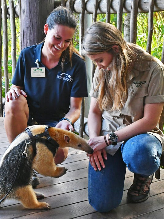 Bindi Irwin at Brevard Zoo