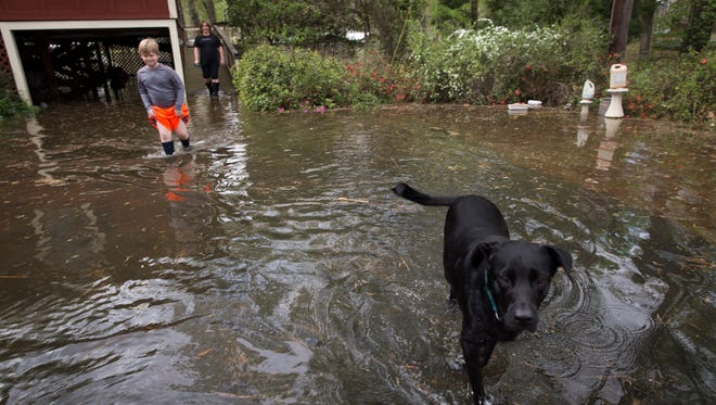 Henry, a lab, walks through floodwaters as his owners Melissa and her son Hadley Anderson follow in the Oak Lawn Island subdivision, virtually surrounded by flooding from Caddo Lake in Mooringsport March 13, 2016.
