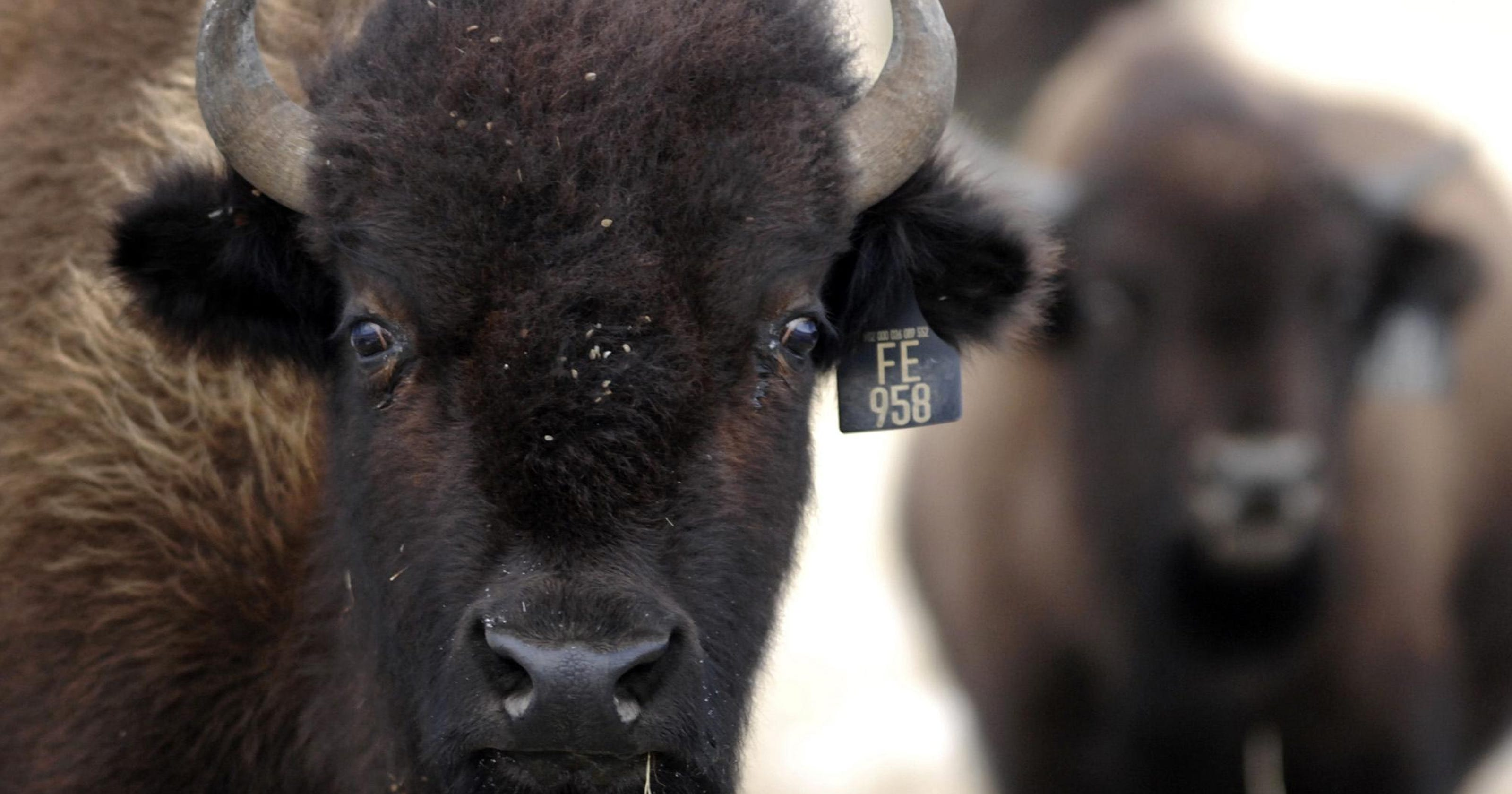Who owns Montana? Top 10 landowners