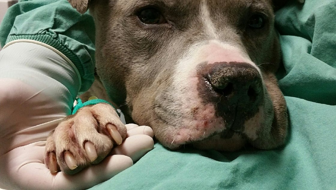 Detroit Animal Care and Control - Home | Facebook