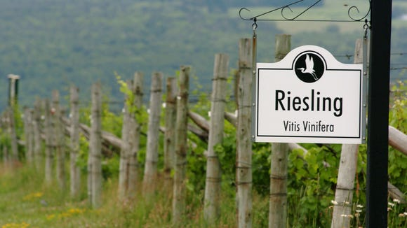 Rows of Riesling grapes line the vineyard in front of Heron Hill Winery.