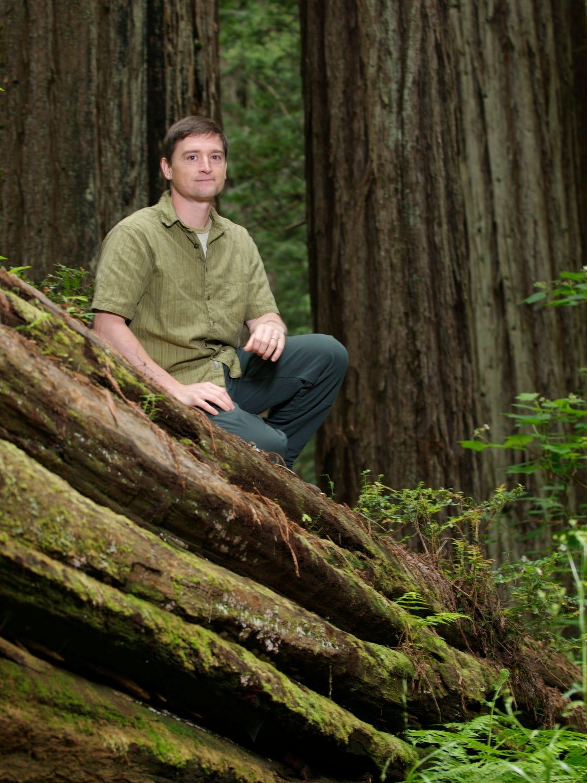 Steve Sillett is a professor at Humboldt State University,