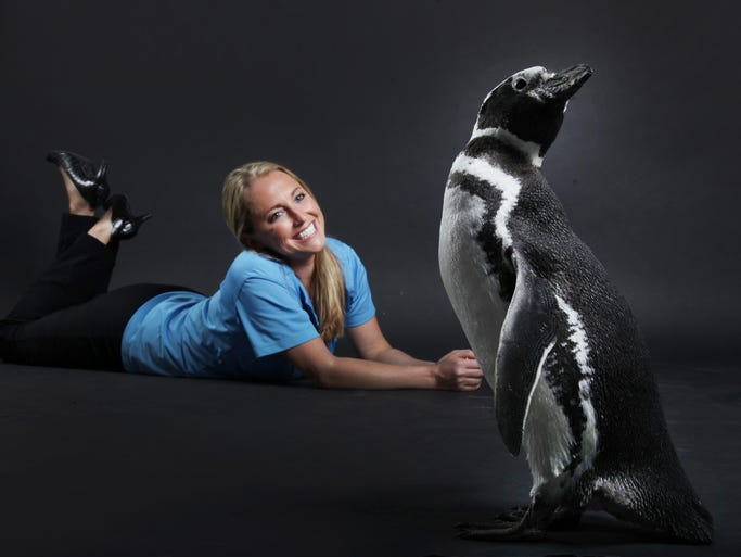 Animal Ambassador Corey Oxman, of Sea World & Busch Gardens, watches Penny, a Magellanic Penguin, while they visit the News-Press photo studio on Thursday. Sea World & Busch Gardens is promoting Summer Nights at both parks. During Summer Nights the parks will be open for extended hours and will have nightly fireworks along with a variety of new shows and attractions.