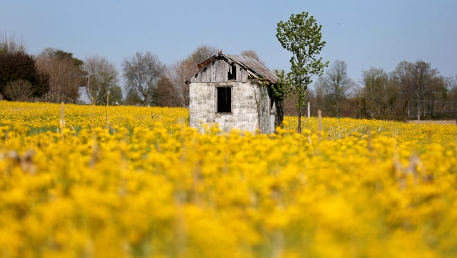 An old barn sits in a field of wildflowers in Pike County, one of those communities targeted by the controversial rural tax credits proposal in front of the state legislature.