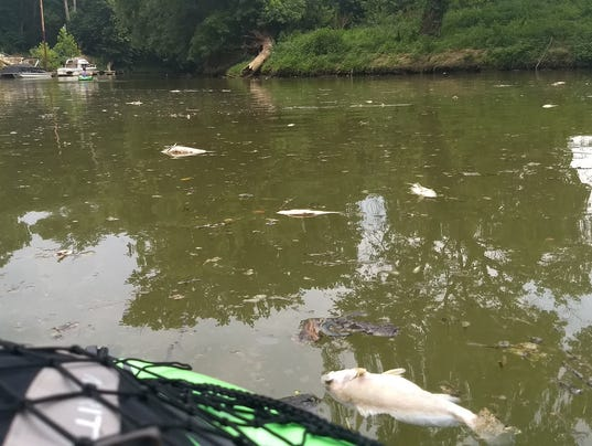 Hundreds of fish die after chemical from ford plant for Fishing in louisville ky