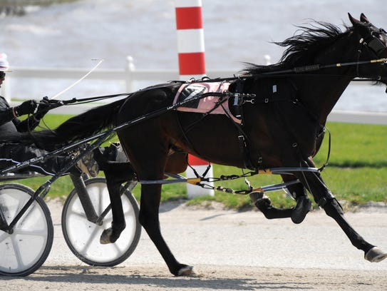 A harness-racing horse at Hoosier Park.