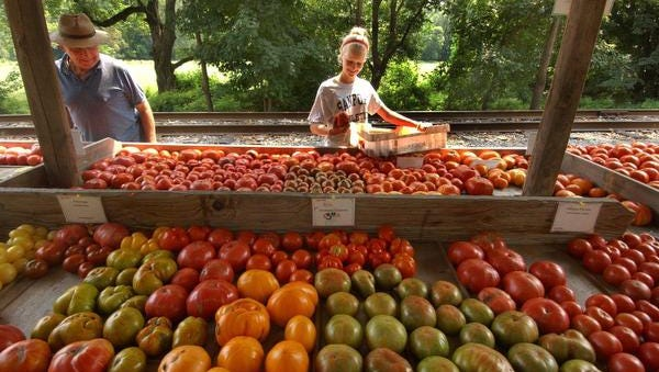 An employee stock tomatoes at SIW Vegetables on Rte 100 near Chadds Ford... as she chats with a customer.