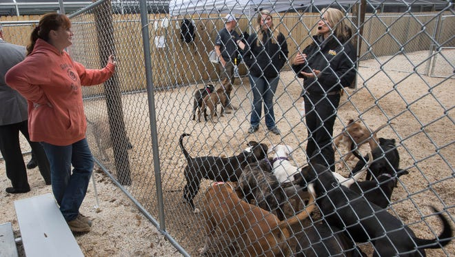GreaterGood.org's, Rescue Rebuild Director, Bryna Donnelly, left, talks with Dogs Playing for Life's, Aimee Sadler, at the Escambia County Animal Shelter Monday morning Jan. 29, 2018. The organizations are working together to improve conditions at the county-owned facility.