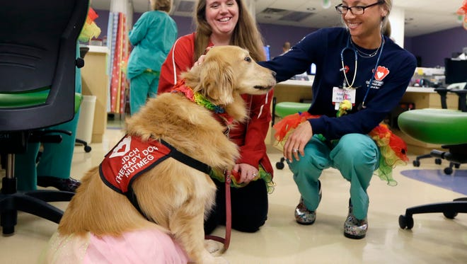 Registered nurse Caitlin Gruberg, right, and dog handler Katelynn Torres, left, pet Nutmeg, a therapy dog that helps patients reduce their anxiety, on Tutu Tuesday at Joe DiMaggio Children's Hospital in Hollywood, Fla., Tuesday, March 24, 2015. (AP Photo/Alan Diaz)
