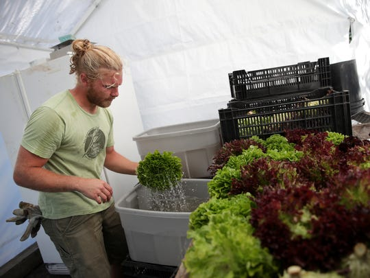 Kendall Vosters, of Fox Cities Farm, washes and organizes lettuce at his farm in the town of Vandenbroek.