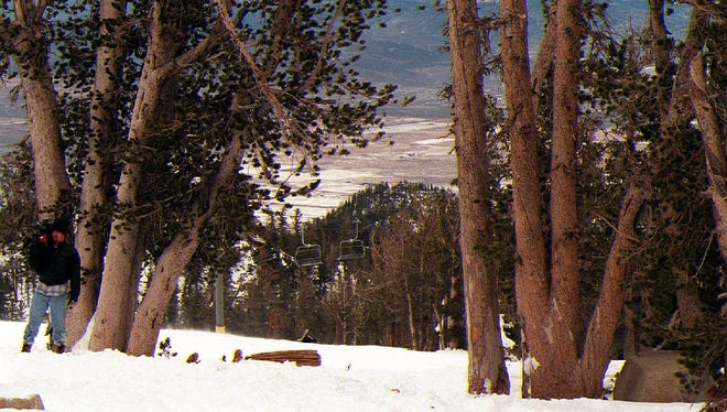 Sonny Bono was killed while skiing through this patch of pine trees at Heavenly Ski Resort Monday.