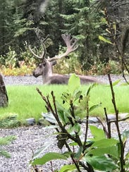Scenery on the Alaskan retreat sponsored by Kentucky