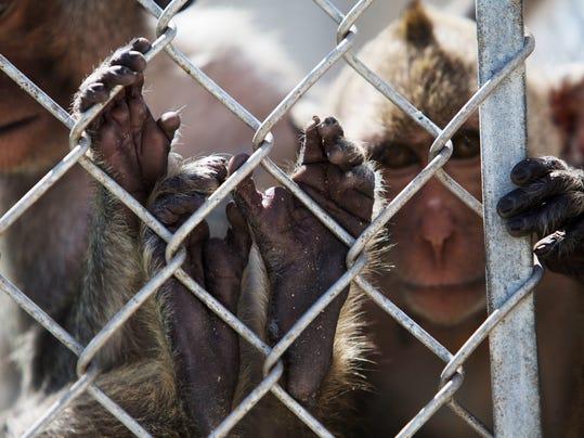monkey01.jpg
