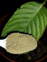 Kratom, an herb that could be labeled as a Schedule