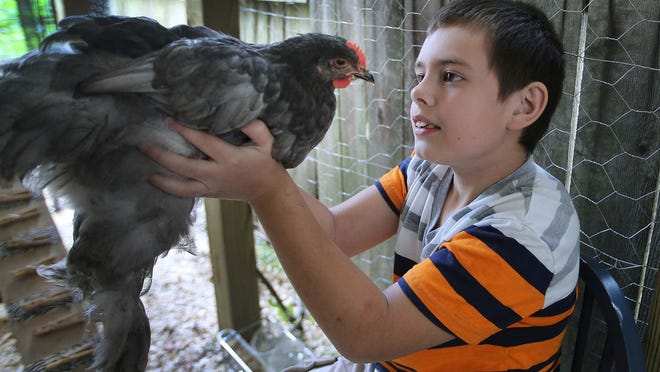 Sherri Frushon said keeping chickens has helped her son Anthony, who has autism, be calmer and more social.