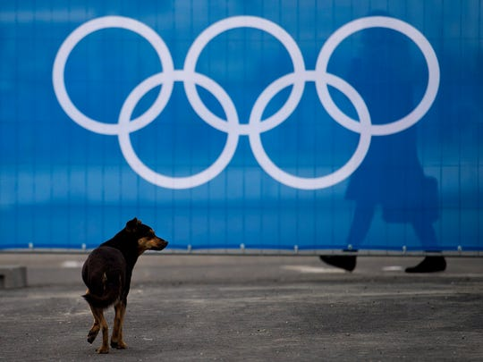 A stray dog walks past the Olympic rings during the official flag raising ceremony before the 2014 Sochi Winter Olympics in Sochi, Russia.