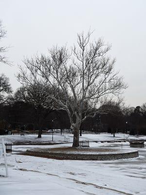 The tree on the island at Graydon Pool on Friday, Feb. 9, 2018.