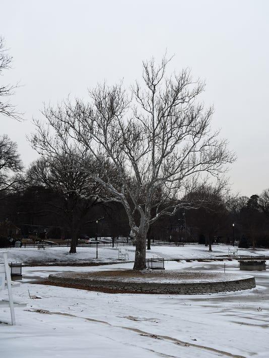 Graydon Pool Tree