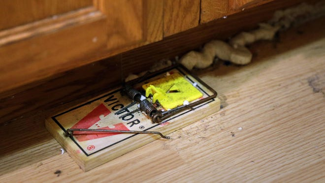 Rat traps line the baseboards in the kitchen of a home where Sen Cross lives in an apartment at 4709 W. Lisbon Ave. The property is owned by landlord James Herrick.