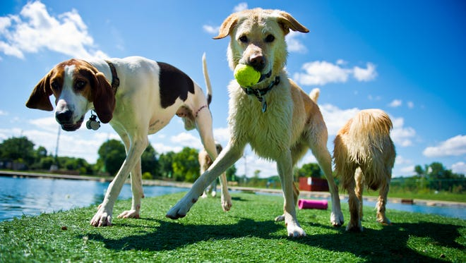 Experts haven't seen any local cases of particularly virulent strain, H3N2, but are preparing for the possibility of it showing up here in dogs.