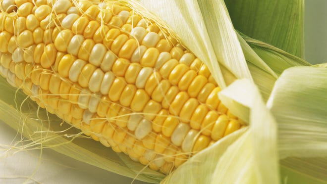Sweet corn is still in season in late summer and very early fall. Slice kernels from the cob for use right away and freeze some for later use.
