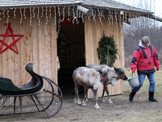 Lisa Schaertl and her reindeer, Little Buddy and Moose, on their property in Shortsville, Ontario County.
