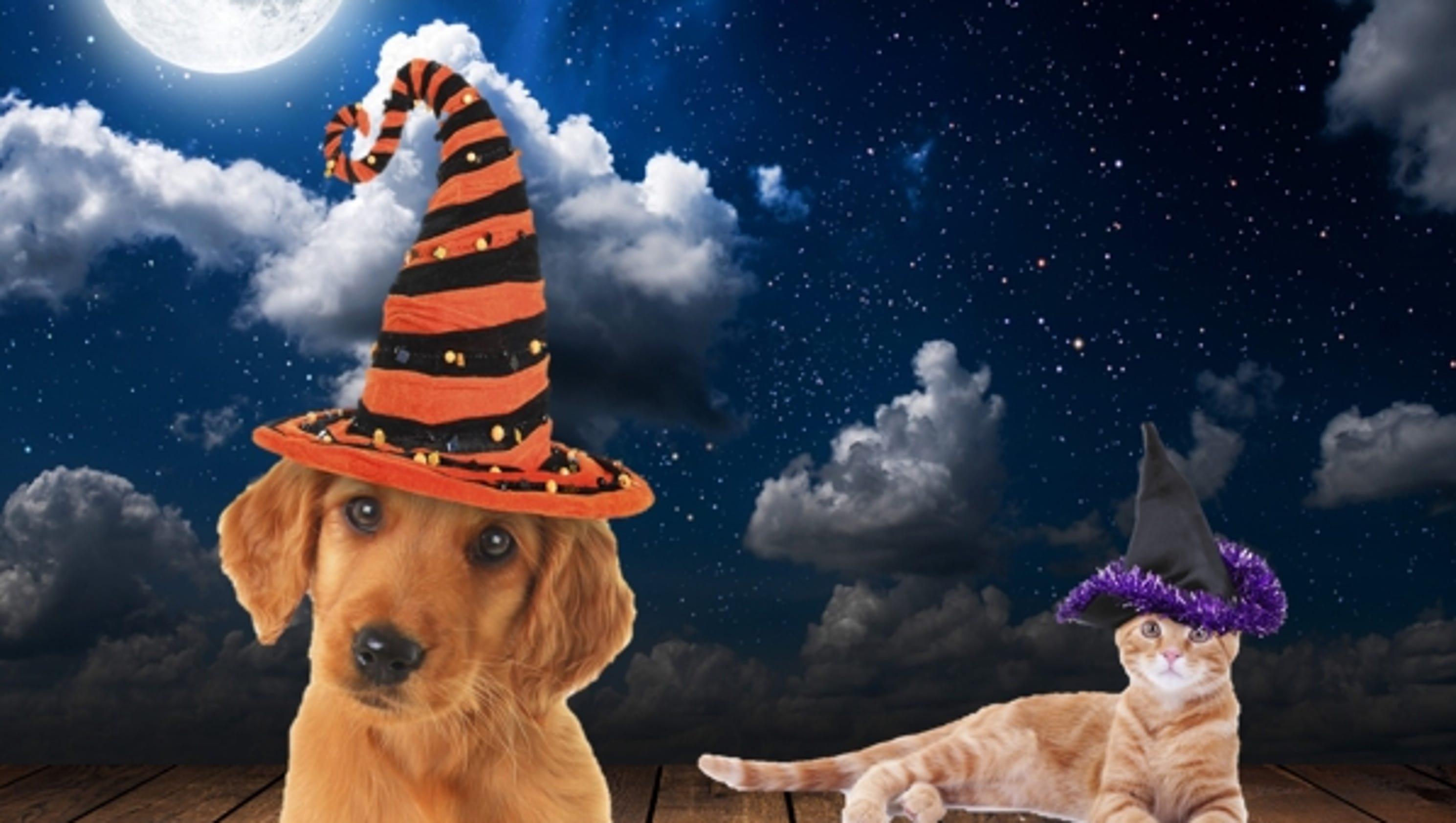 online halloween dog costume contest