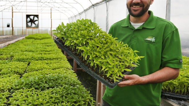 Matt Ewer, 37, runs Feel Good Farm, which sells its organic farm produce through Green BEAN Delivery. Here he holds a tray of mini sweet peppers in a greenhouse on the farm near Sheridan in Hamilton County. BEAN is an acronym for Biodynamic, Education, Agriculture and Nutrition.