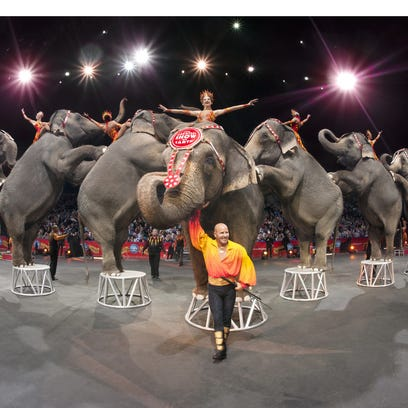 Elephants of the Ringling Bros. and Barnum & Bailey