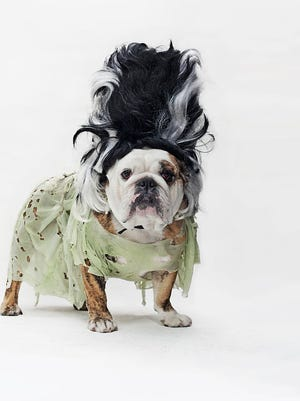 Don't forget to safeguard your pets on Halloween.