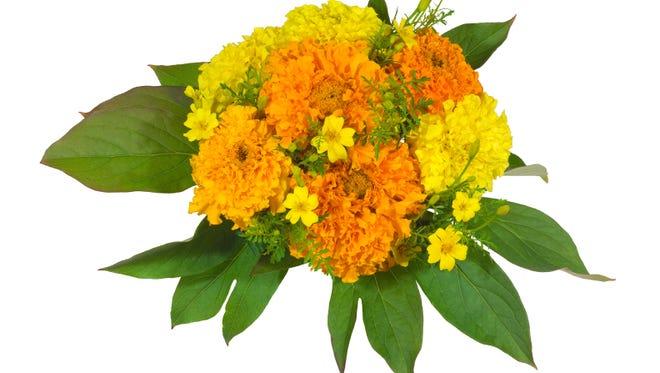 Yellow and orange marigolds.
