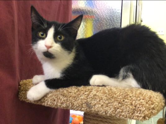 Cats at Oshkosh Area Humane Society