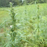 Clarksville veteran family finds hope in hemp