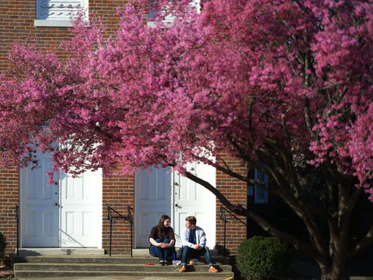 A tree blooms purple flowers as New College Franklin