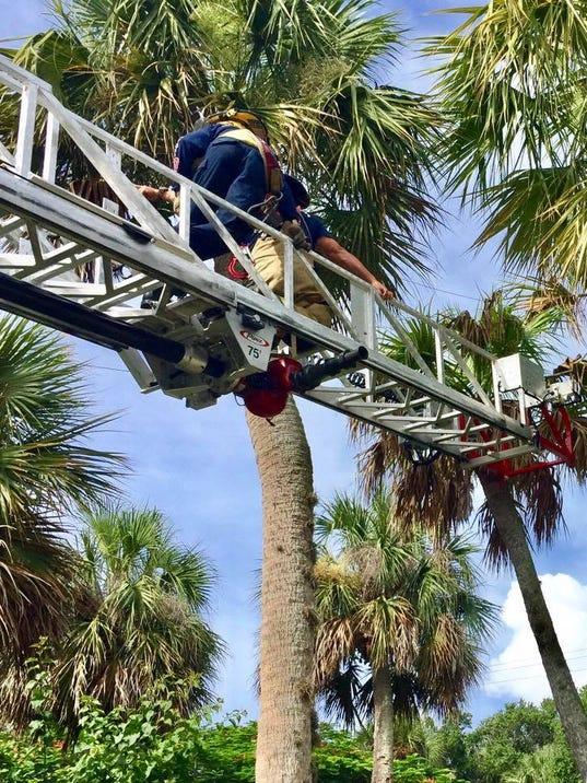SLC-tree-trimmer-rescue-2.jpg