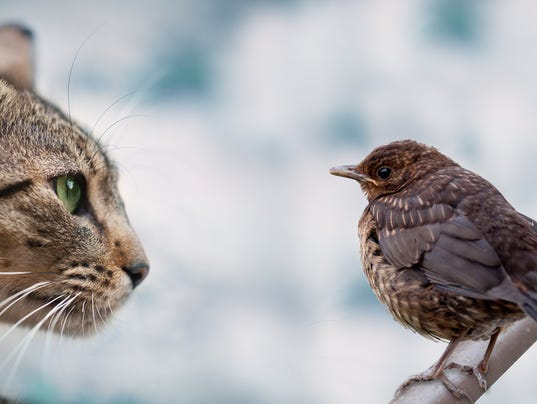 bird and cat